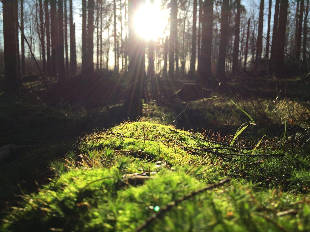 Fire måder at komme tæt på naturen, når du rejser